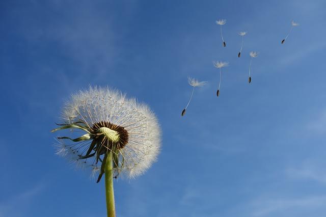 Negative Seeds